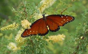 http://www.botanicaatlanta.com/Butterfly%20Garden.jpg