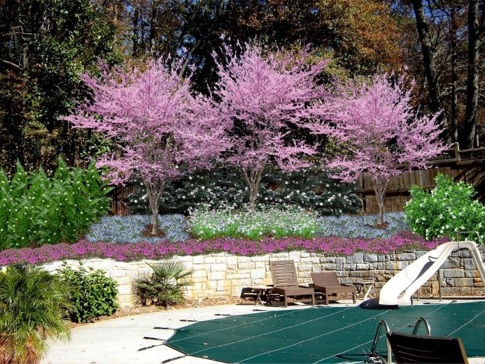 Decatur Georgia Pool Area Landscaping After Jpg