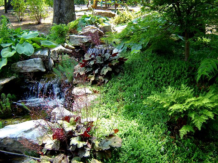 A waterfall in Marietta Georgia with various perennials, ground cover, and a Japanese maple.