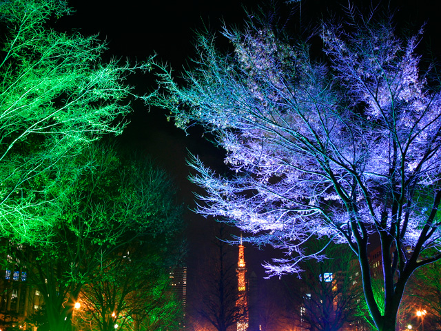 Christmas Decorating With Floodlights : Atlanta landscape architecture